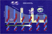 telomere & telomarse