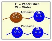 Adhesion & Cohesion