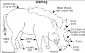 The warthogs body structure