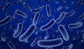 Las bacterias son :