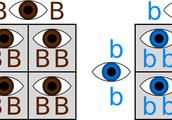homozygous examples