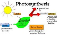 The steps of photosynthesis