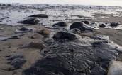 Oil Spills Education Night