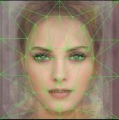 顔構造を理解する