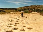 The La Junta Grassland