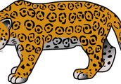Larry the Cheetah