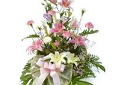 Send Roses and Tulips to Jammu With Online Flower Delivery