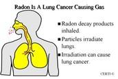 radon in body