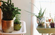 Keeping your house plants fresh and green
