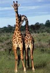 Animals Exhibit Homosexuality too