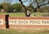 The wonderful Duck Pond
