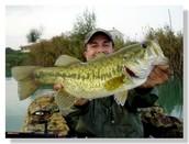Largemouth Bass: A Game Fish