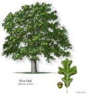 PLANT LIFE-BOTANIST