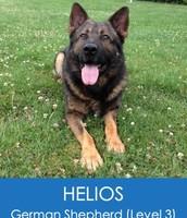 HELIOS (GERMAN SHEPHERD – LEVEL 3)