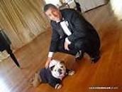 adam sandlers dog