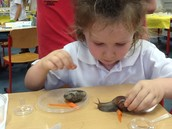Comparing our Snails