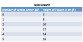 Tulip Growth Table