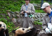 How to help the Giant Pandas Survive