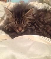 My kitten Swiffer