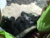 The new baby gorilla :)