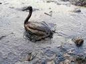 oil spills