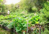 Permaculture For a Gardening Make Over