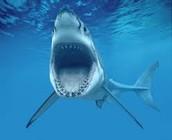 Sharks Are Amazing