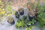 Plants that were brought to plant and beautify the rain garden.