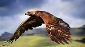 Animal Encounters: Hawk Talk