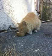 Help us help homeless cats!