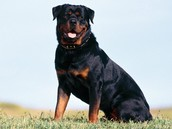 favorite dog