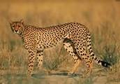 Reasons Of Their Endangerment