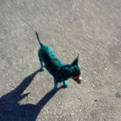 and my blue dog