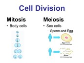 The 2nd difference of meiosis and mitosis