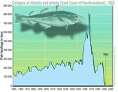 Atlantic Cod Stocks