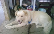 this is my old dog he is a black lab and golden retriver
