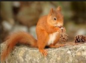Animals in the Thetford Forest